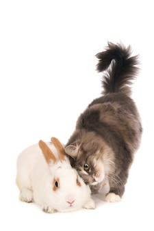 Кошка обнимается с кроликом.