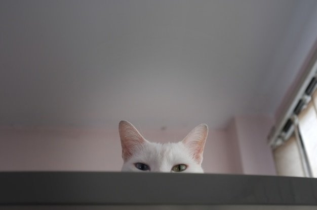 Cat curiously peeking out