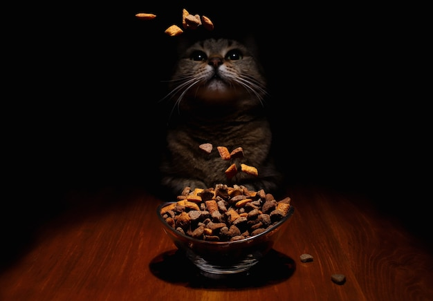 A cat on a dark background looks at the falling food