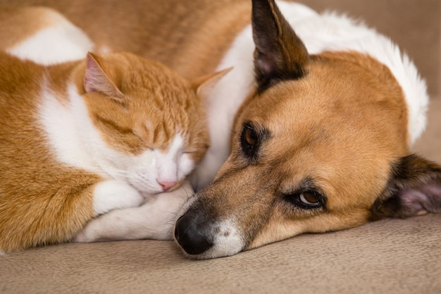 Cat and dog resting togethe. best friends.