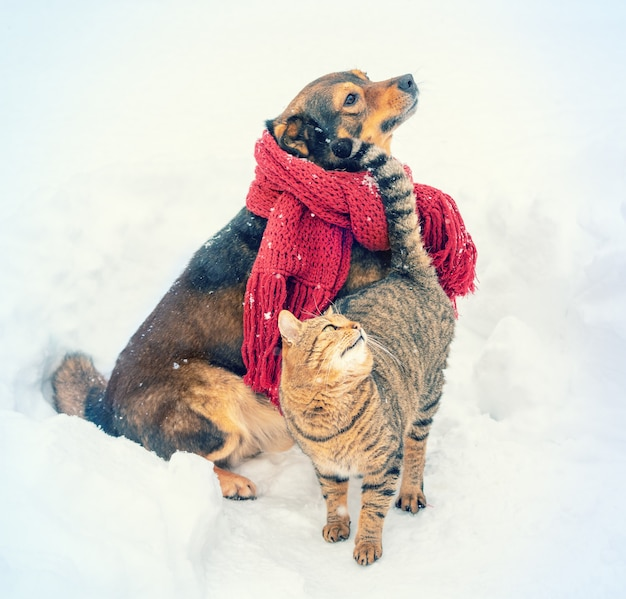 A cat and a dog walk outdoors in a snowy winter the dog in a warm scarf the cat rubs the dog