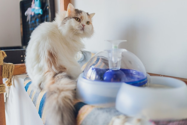 Cat drinking water in auto machine closeup