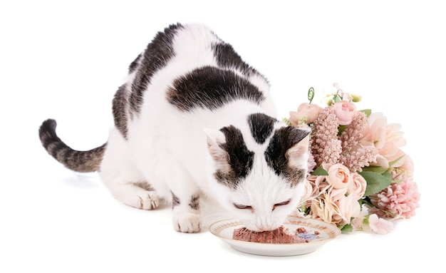 Cat eating food in a plate on a plate isolated