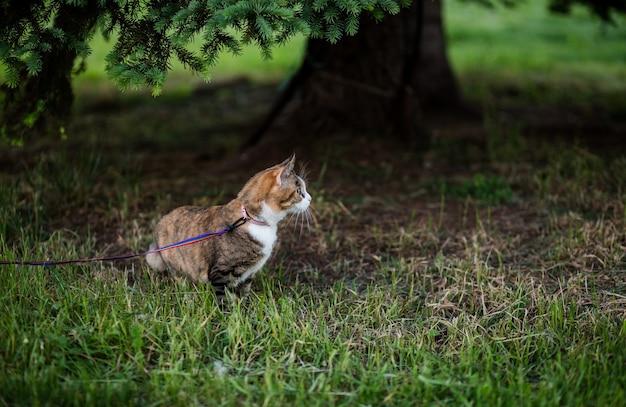 Кошка ест траву в парке