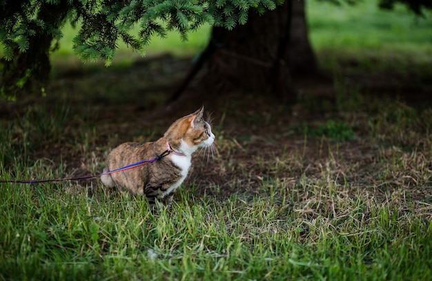 Cat eating grass in the park