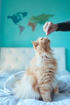 自宅で健康的な食事を食べる猫
