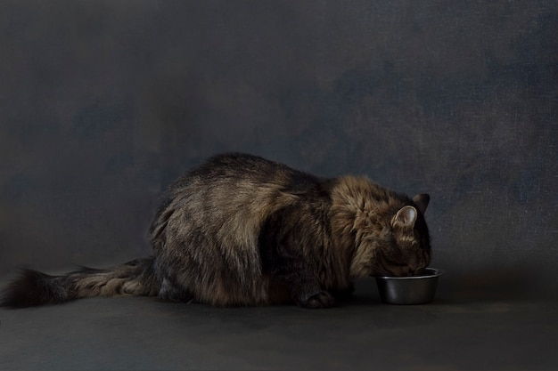 Кошка ест.