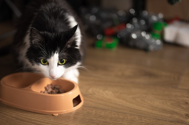 Cat eats food from a bowl on the background of a blurred christmas tree with christmas gifts. copy space