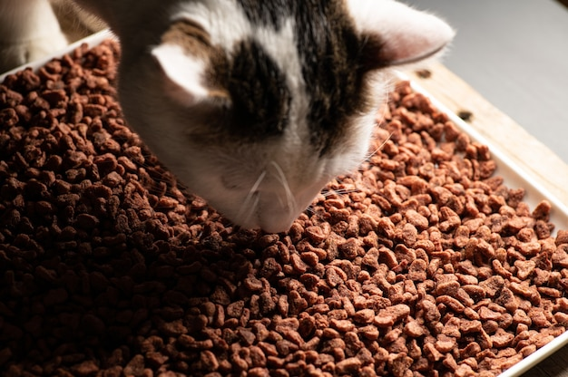 The cat eats natural dry balanced food in granules
