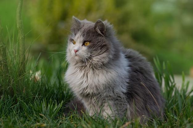晴れた春の天気を楽しんでいる猫