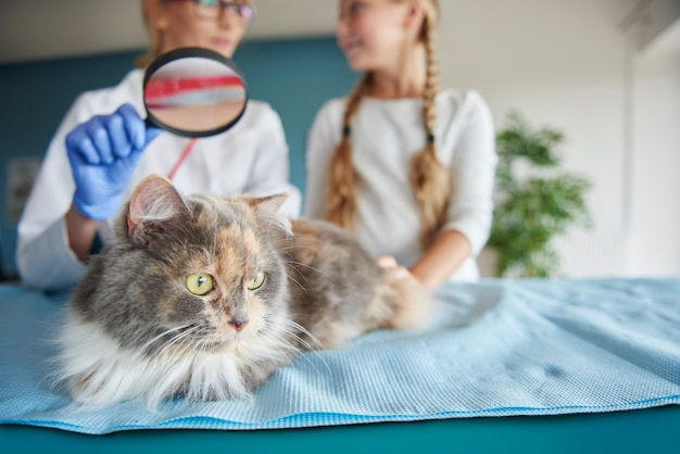 Esame del gatto con una lente d'ingrandimento
