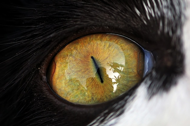 Cat eye, closeup