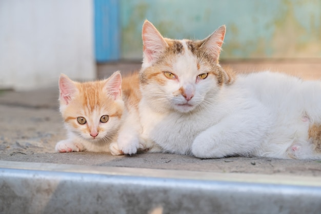 Cat family, rural mom cat with kitten, lying outdoor