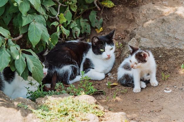 Семья кошек гуляет вместе на природе