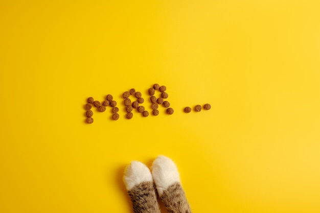Cat food on yellow background laid out in word of cat purring, mrr top view, cat paws