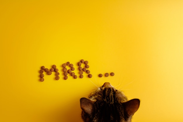 Cat food on yellow background laid out in word of cat purring Premium Photo