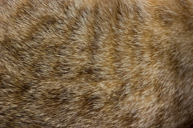 Cat fur close up background texture. brown abstract stripes.