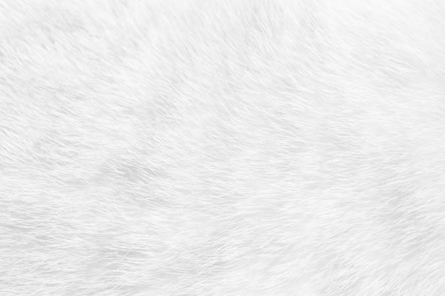 猫の毛皮は、背景のテクスチャを閉じます。白い抽象的なストライプ。