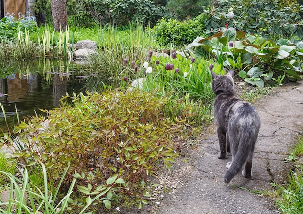 Cat on a garden path looking at flowers