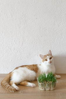 Cat and grass that you can eat.