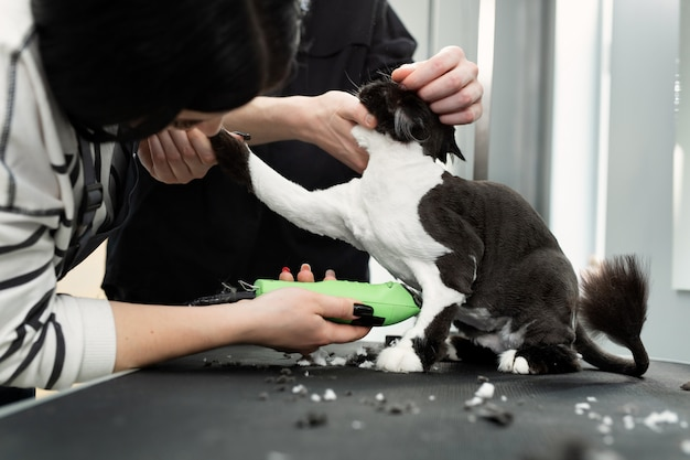 Cat grooming in pet beauty salon. grooming master cuts and shaves a cat, cares for a cat. vet uses an electric shaving machine for the cat