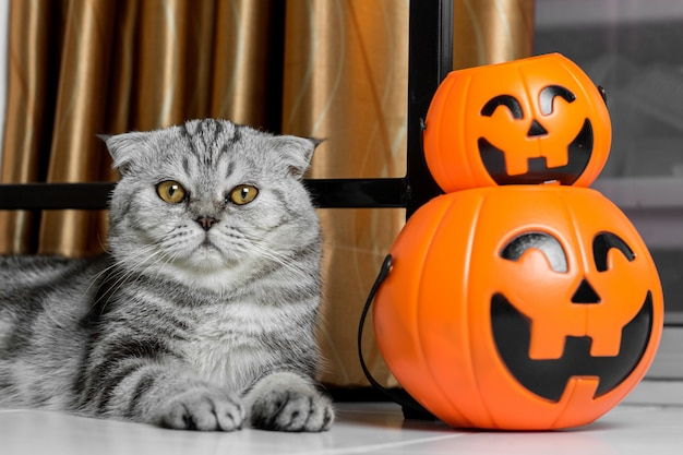 Cat in the halloween festival.