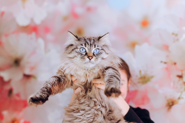 大きな花と壁の背景に彼女の手で女の子が抱いた猫