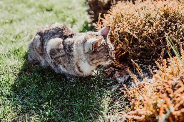 Cat hides in bushes on plot of house, hunting for birds