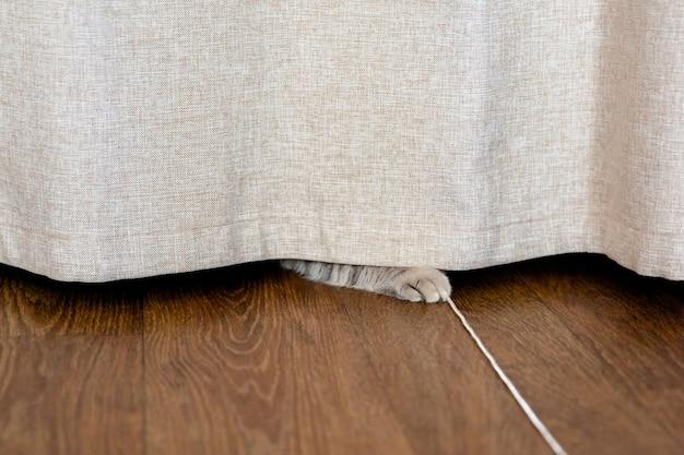 고양이는 한 발로 체인으로 커튼 아래에 숨어 있습니다.