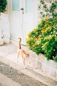 Кот на клумбе из цветов