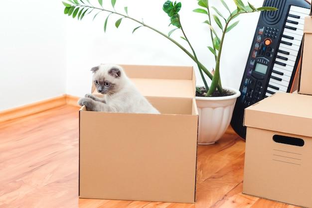 Кот в коробке в новом доме. упакованные хозтовары для переезда в новый дом. животные, переселение и движущаяся концепция.