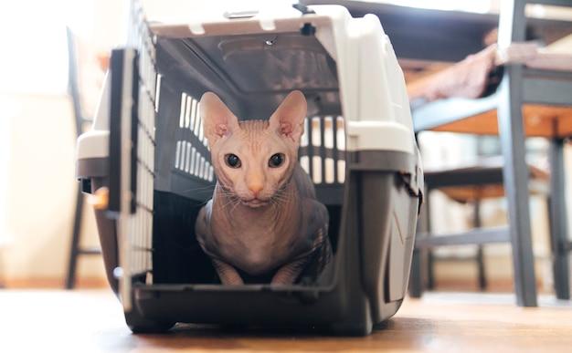 캐리어 동물 여행에 고양이