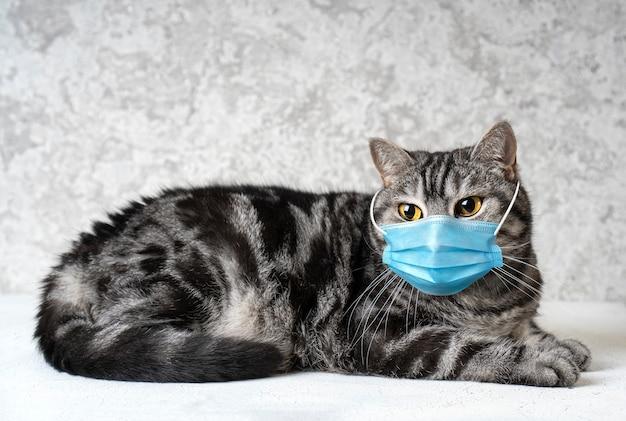 Кот в медицинской маске. концепция карантина кошек