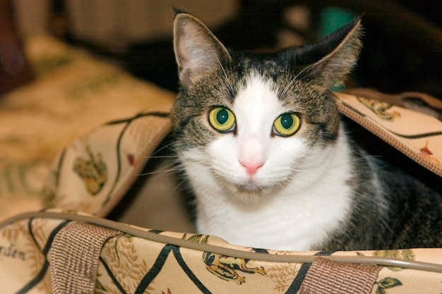 가방에 고양이