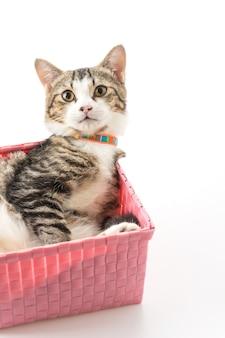 바구니에 고양이