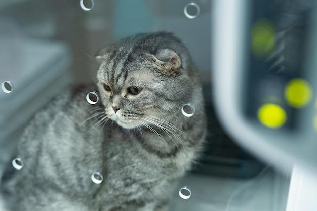 Кошка в клетке реанимации в ветеринарной клинике для животных на капельнице