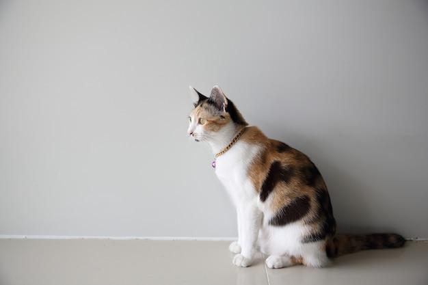 가까이에서 고양이