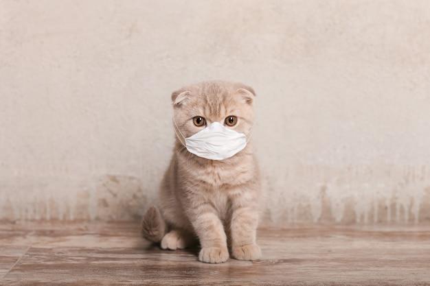 ベージュ色の背景に医療マスクの猫