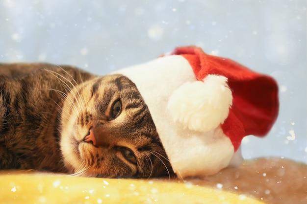 赤いクリスマスの帽子をかぶった猫。