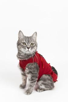 猫のための赤い医療毛布の猫、白の分離