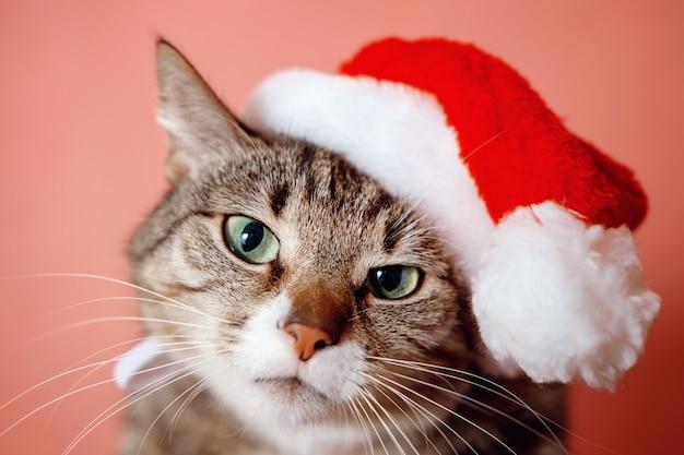 분홍색 배경에 산타 클로스 모자에있는 고양이