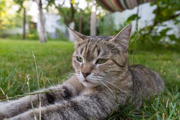 緑の草の中の猫