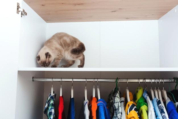 옷장에 고양이. 집 애완 동물, 라이프 스타일. 옷이 있는 옷장. 내부에 흰색 현대적인 옷장입니다. 스토리지 조직. 질서와 청결. 집 옷장에 다른 옷이 있는 옷걸이.