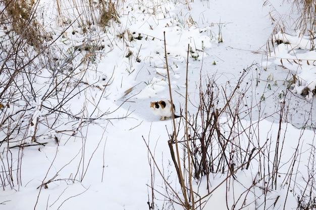 Кот в зимний сезон