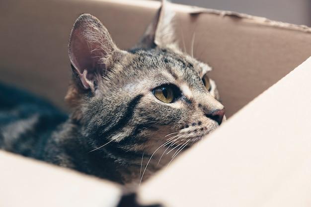 Кошка внутри картонной коробки, любопытный кот, счастливый питомец, морда кошки