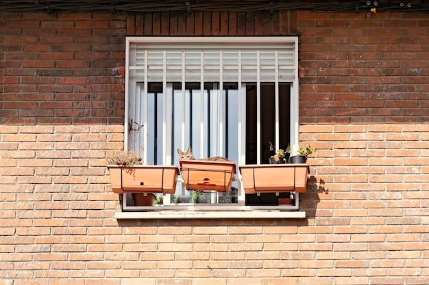 A cat inside a flowerpot is sunbathing outside a window on brick wall