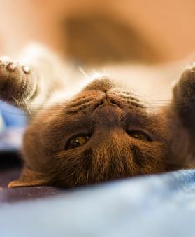 猫は前足を上げてベッドで日光浴をしています。