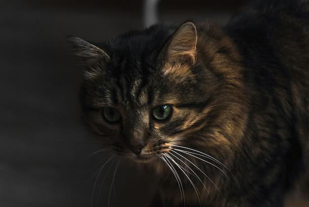 猫が来ています。