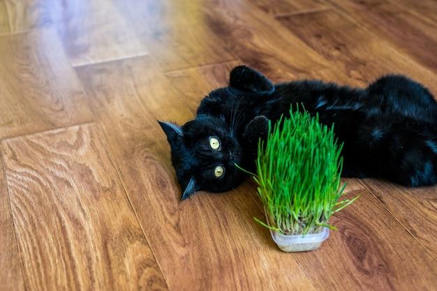 Кошка ест кошачью траву
