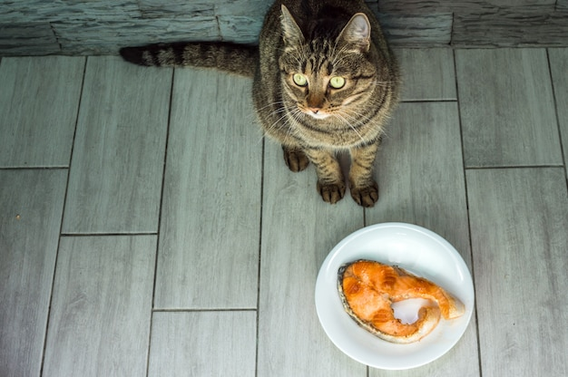Cat is going to eat fried fish trout from the plate